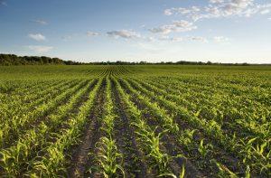 Debat: Husk landdistrikterne i den grønne omstilling