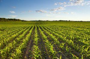 Indspil til finansloven: Afsæt en milliard til bæredygtig landfornyelse